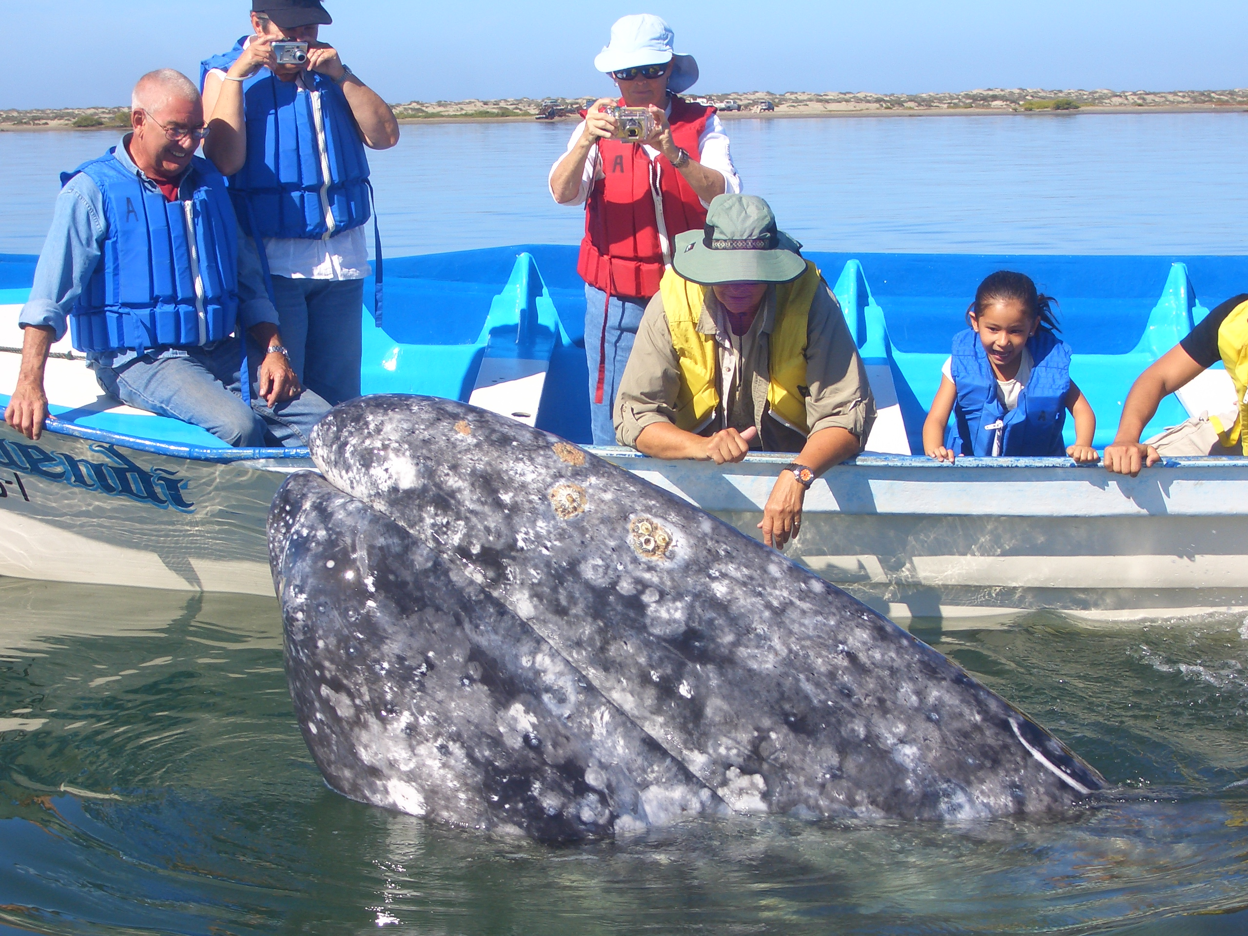 A Whale Watching Family Adventure in La Paz
